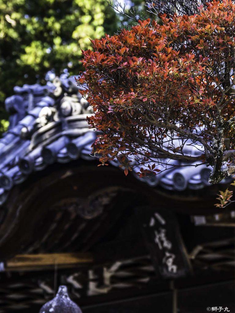 坂下神社 紅葉