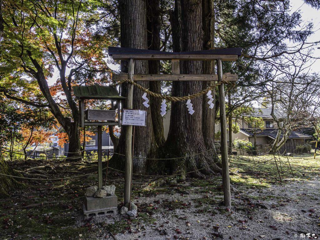 八王子神社 日本大正村 古木 大杉
